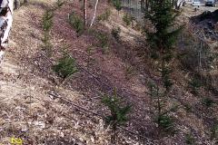 25. 2. 2008  - Osázení  meze smrky mezi střelnicí a obalovnou STRABAK